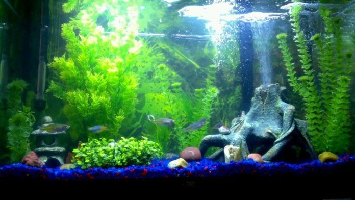 live aquarium plants for sale